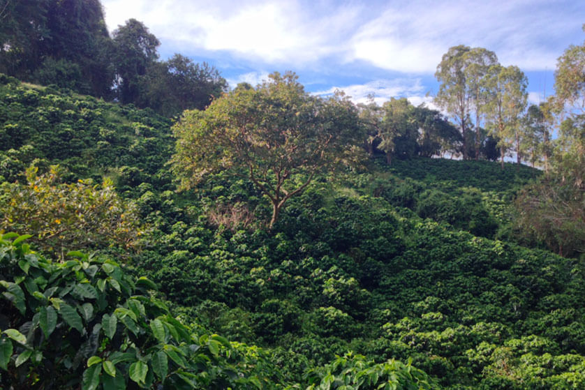 potosi colombie montagne café nature kawa