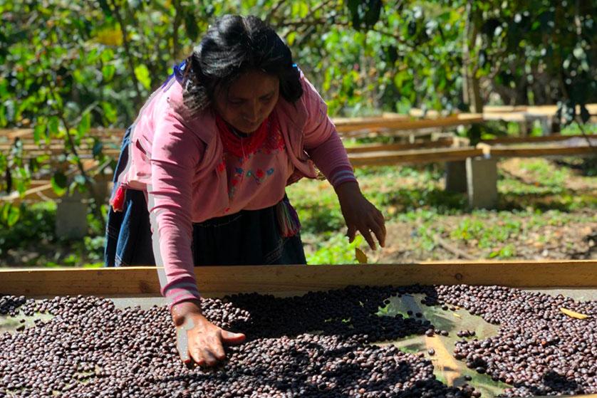 Diego Jimenez cafeiculteur lit africain