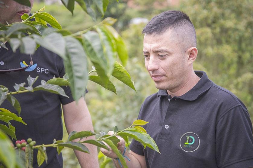 el paraiso agriculteur cafeiculteur kawa coffee