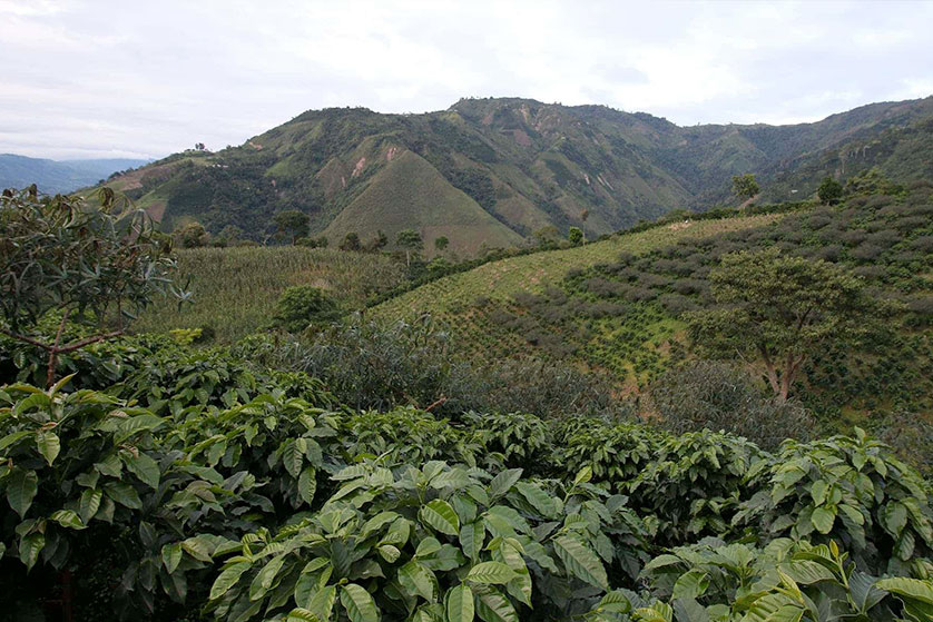 Café de Colombie - La Esmeralda